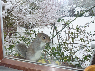 A Winter Visit from a Squirrel
